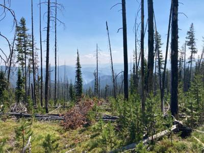 Precipitation keeps Cinnabar Fire in check, new fire reported on Bitterroot