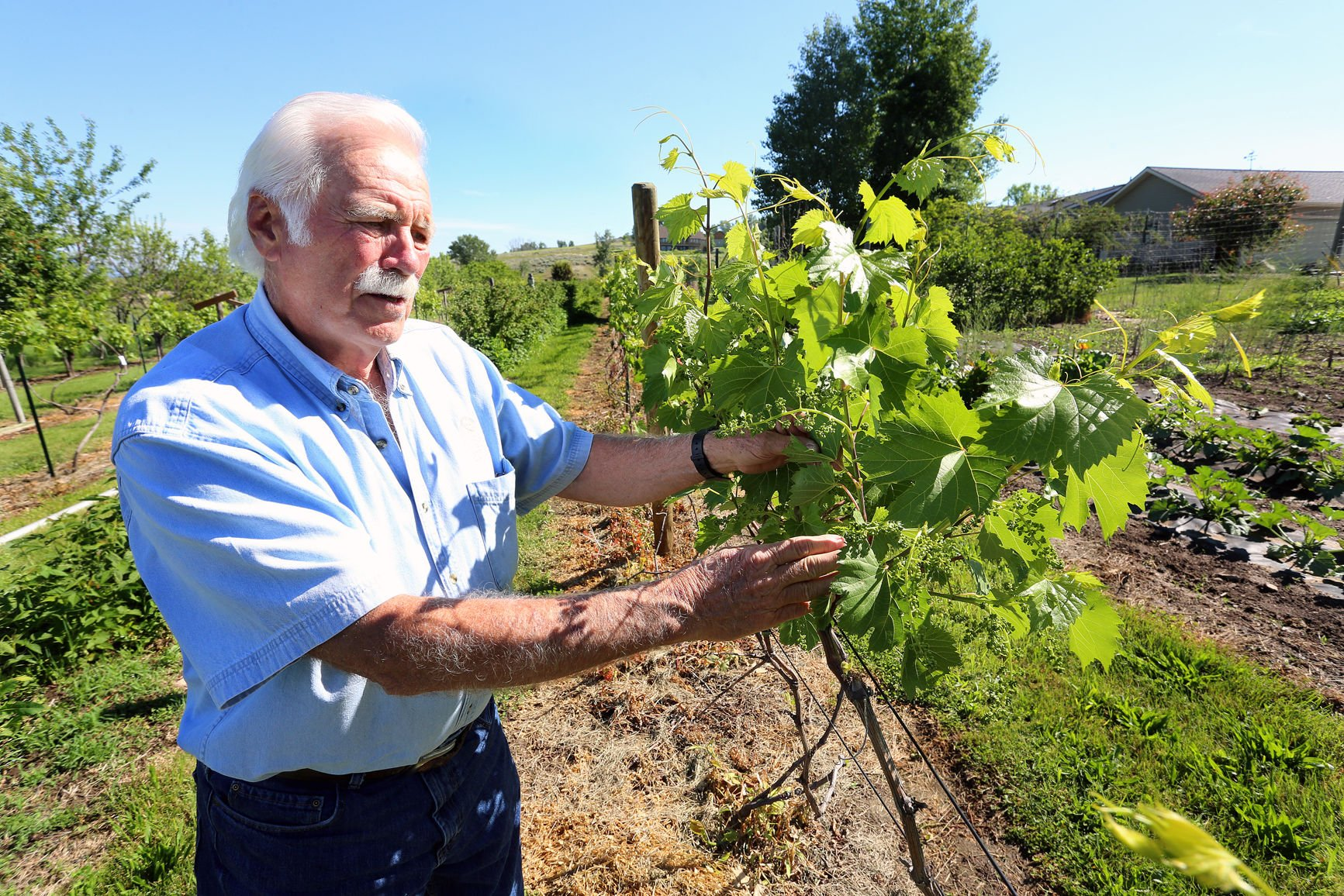 Gardening, viticulture: a selection of articles