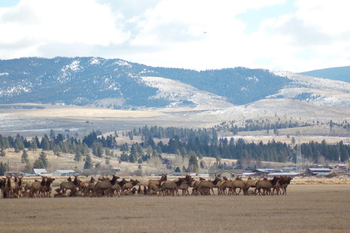 Got elk?