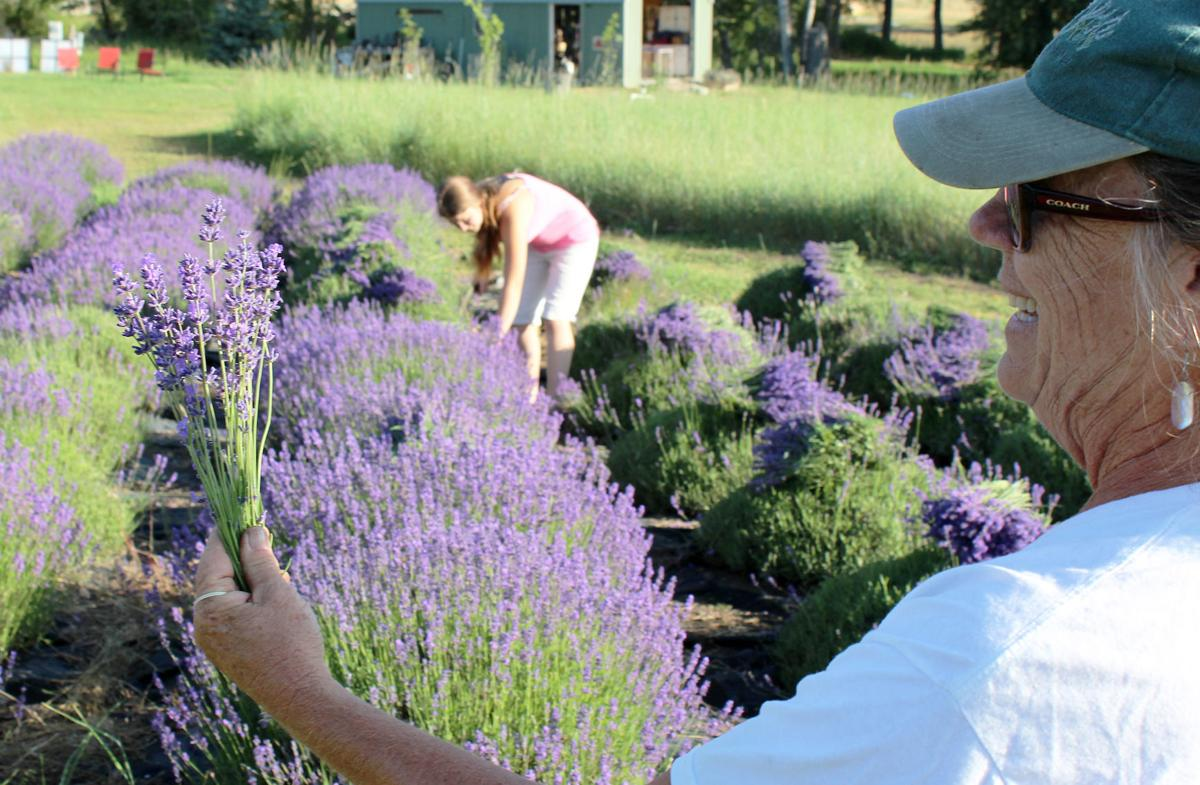 Lavender MM holding stalks