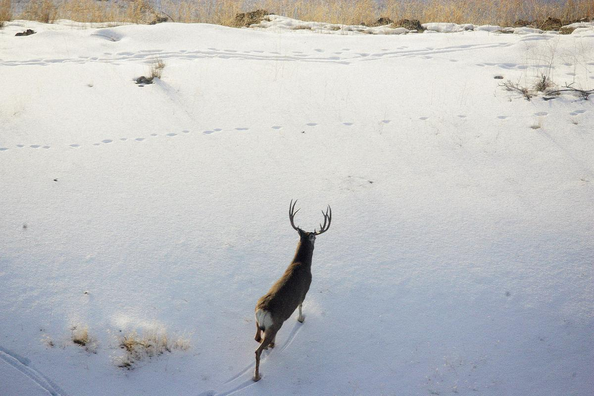 FWP hosts public info session on CWD in Missoula