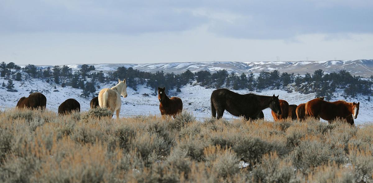 Leachman horses