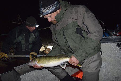 Walleye capture