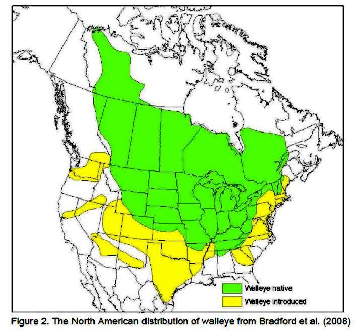 Walleye distribution