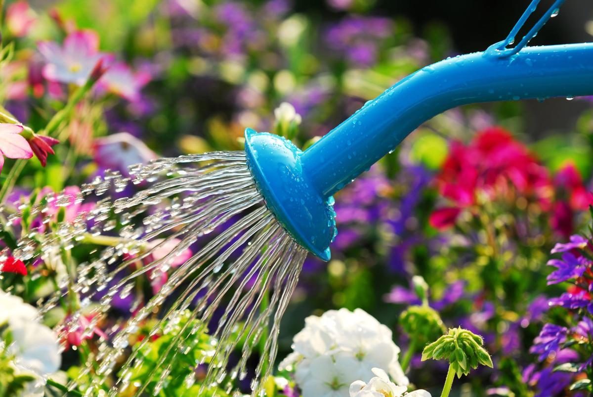 Watering, 92001889