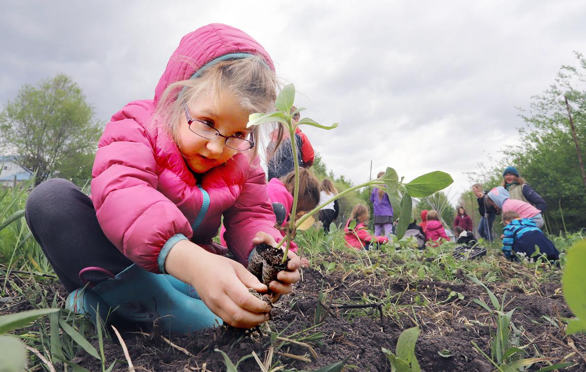 Homestead Organic Farms Kinder-Gardeners