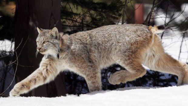 Wildlife funding
