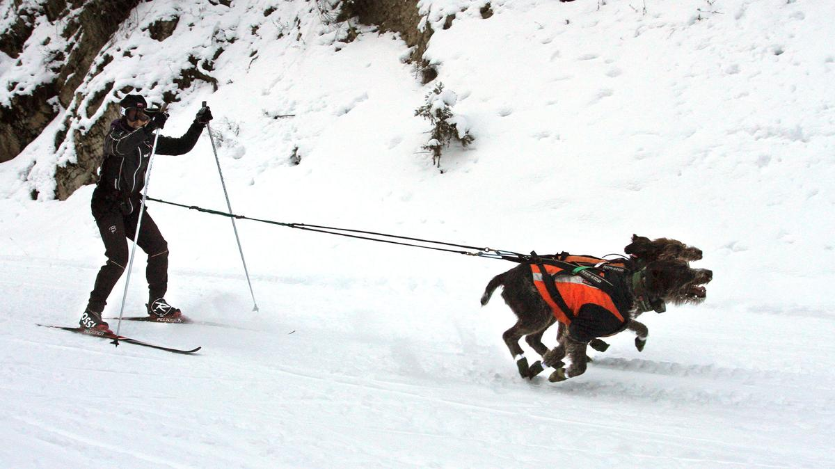 Teresa Petterson 1, skijoring, Darby Dog Derby