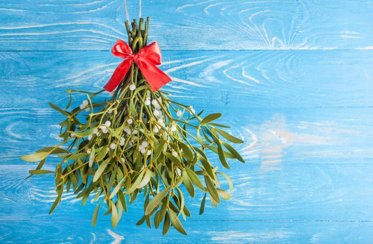 Dirty Fingernails How Mistletoe Came To Become A Christmas