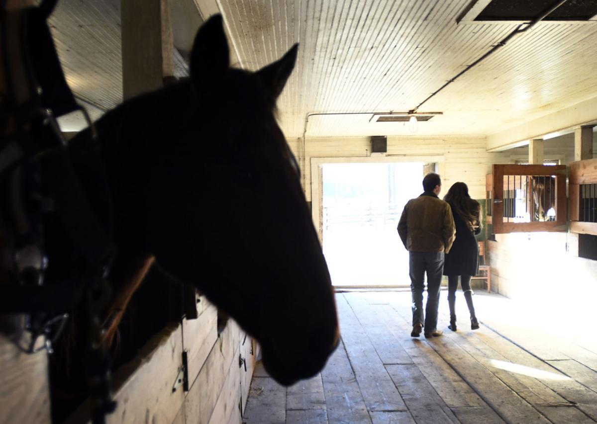 Bullock barn
