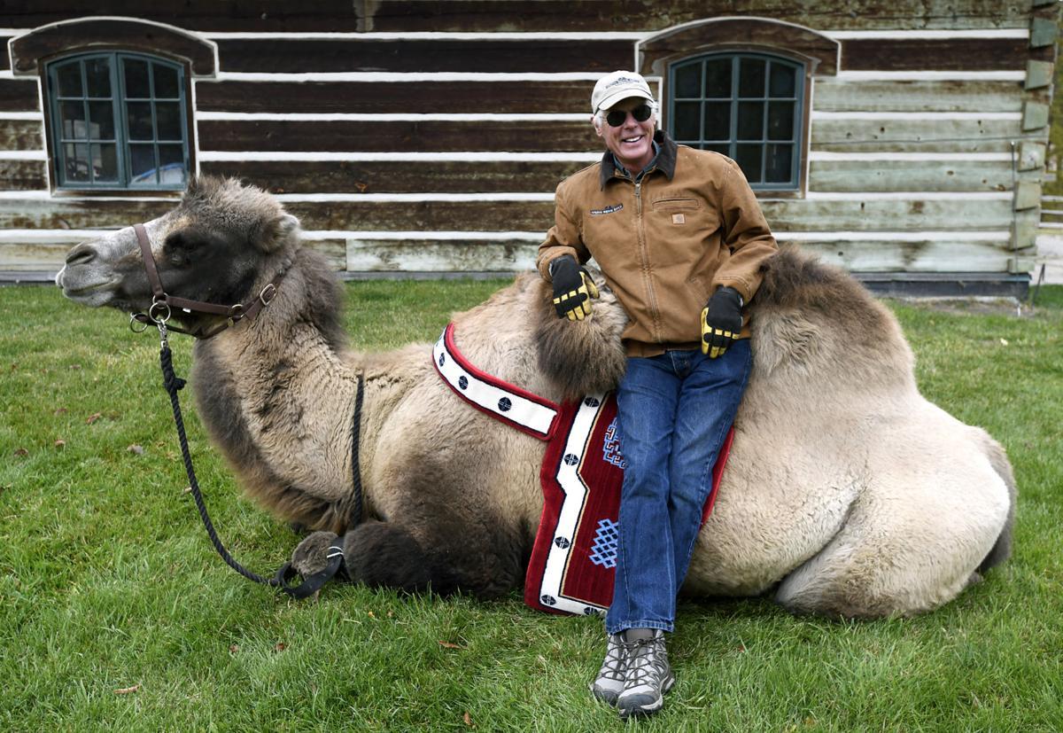 Carlos the Camel 1