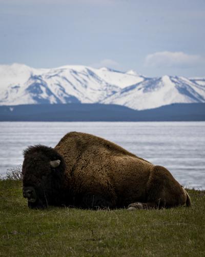 Yellowstone opens