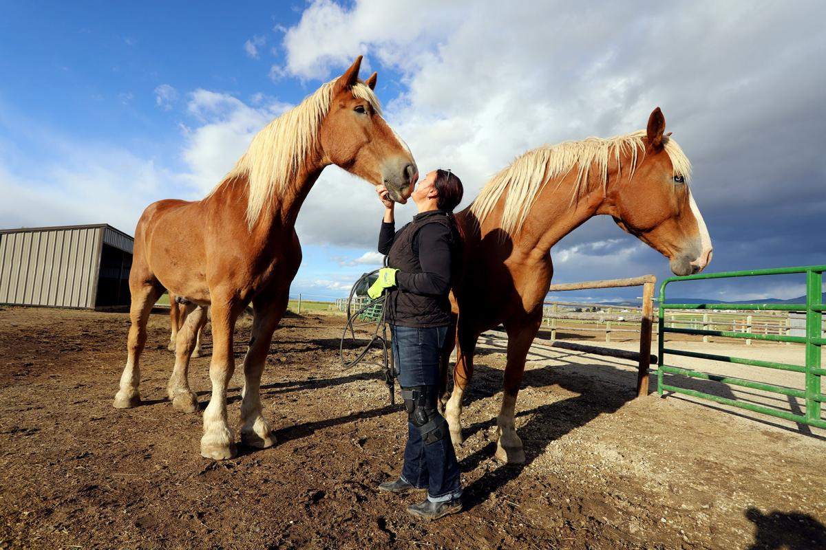 Gentle giants: 1 Horse at a Time Draft Horse Rescue prepares for annual fundraising event