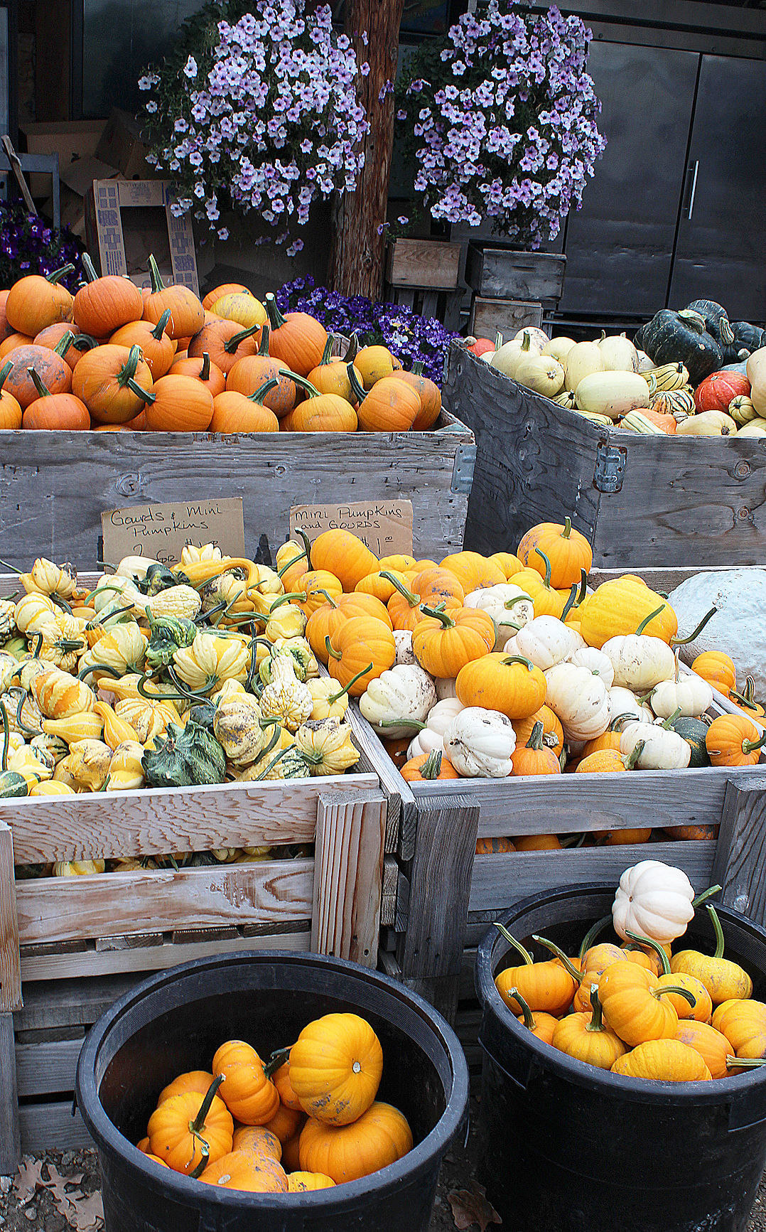 Moeller's fall produce