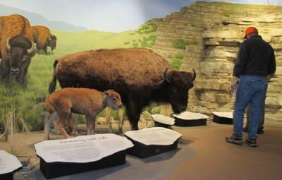 Bison knowledge