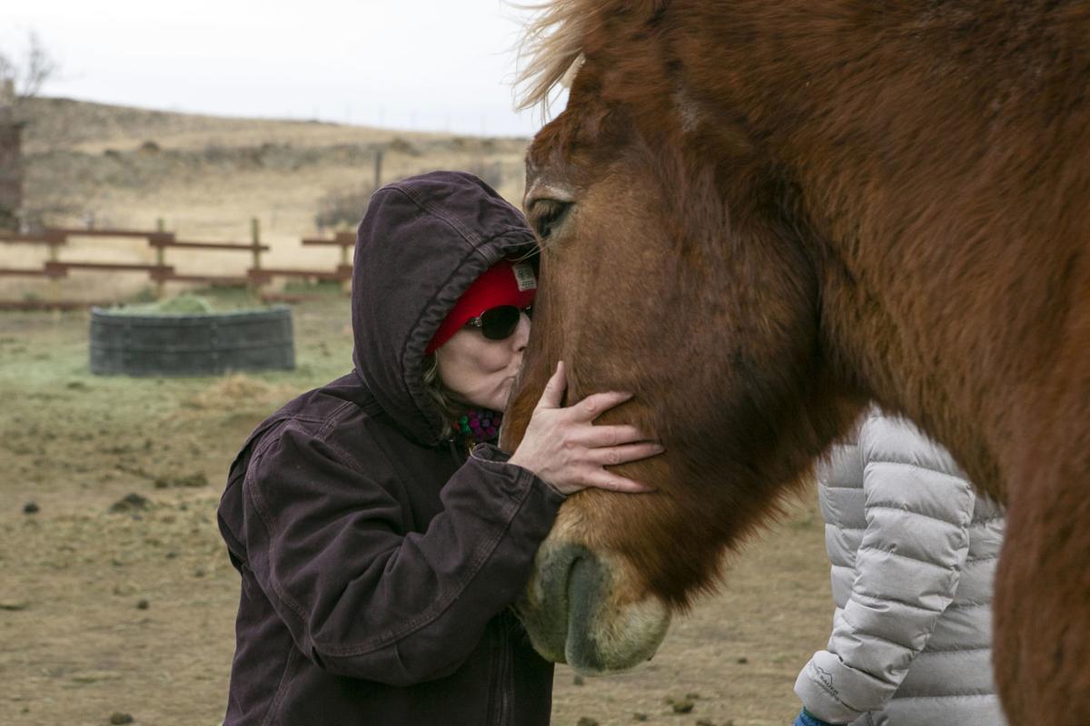 Exchange Draft Horse Sanctuary