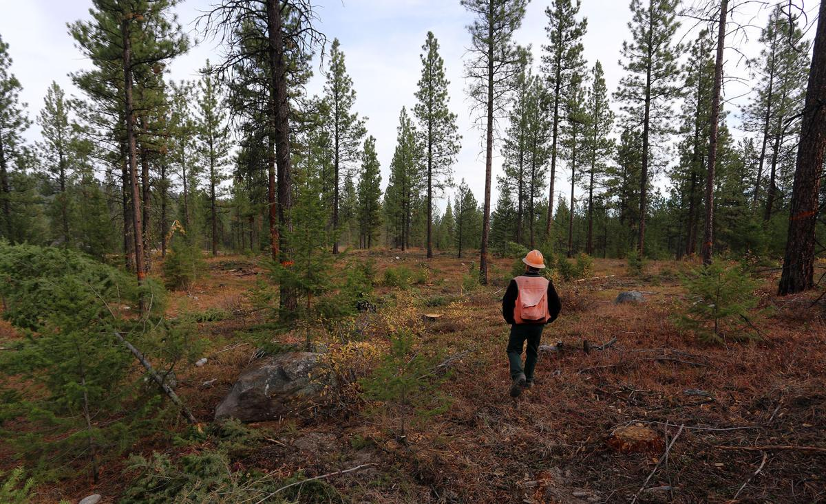 Two Ravalli County projects on Montana Forest Action Plan list