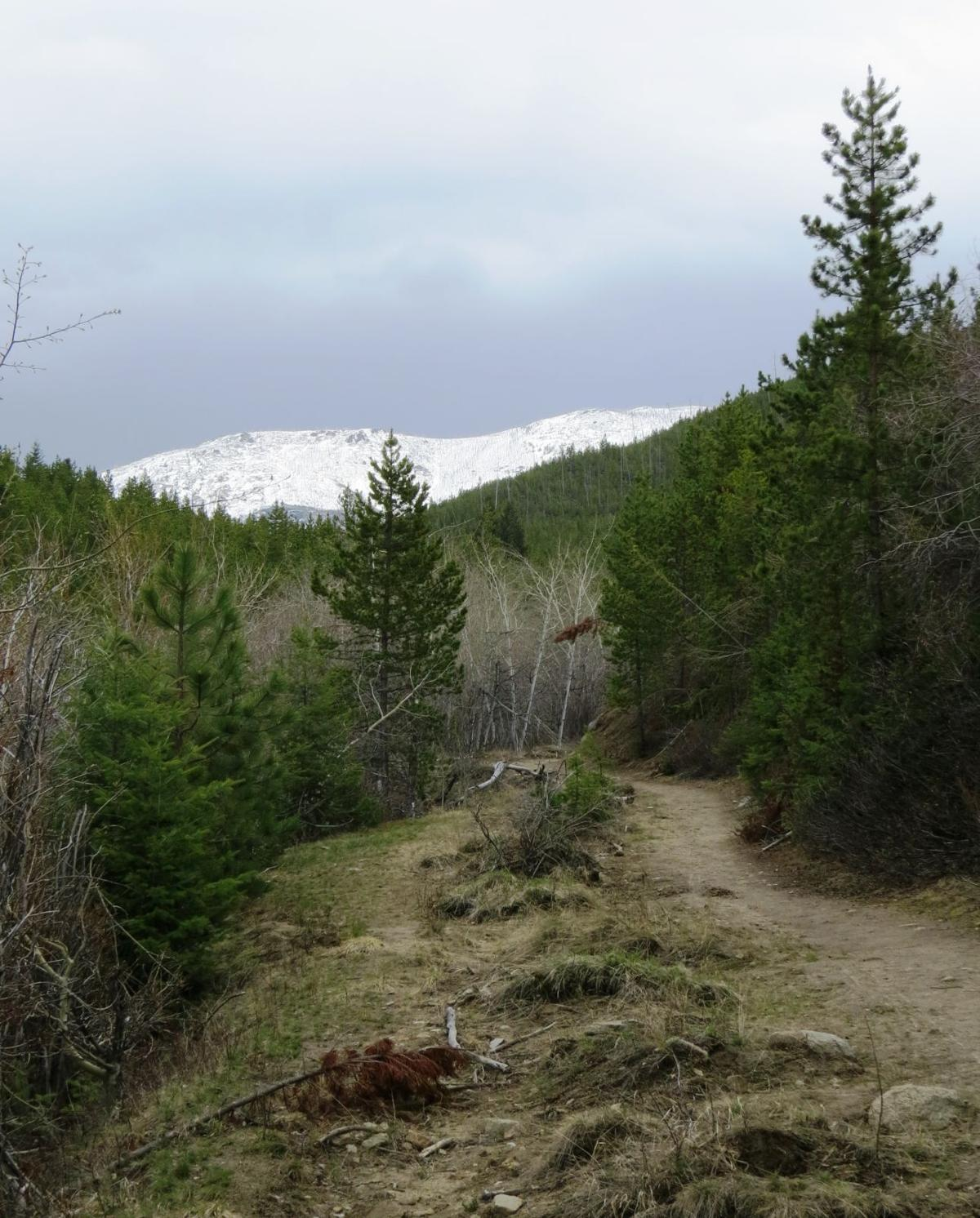 Willard Creek Trail