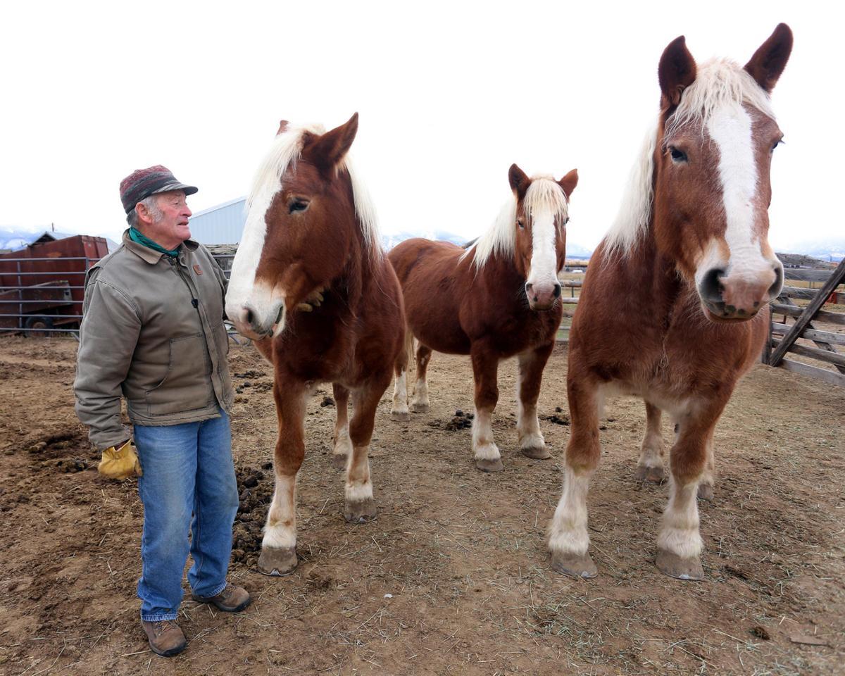 Kent Connor Belgian Horses Stevensvilles Country Christmas