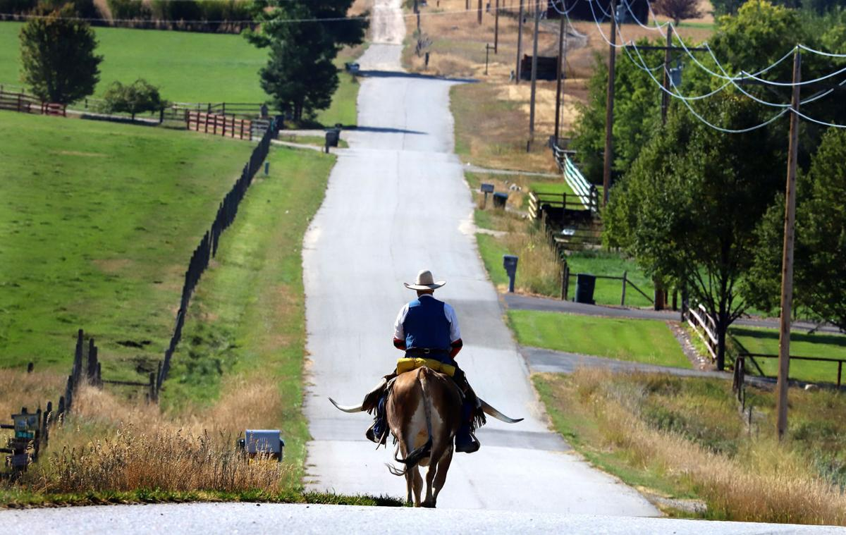 Mr. Piney: A riding longhorn steer is turning heads in the Bitterroot Valley