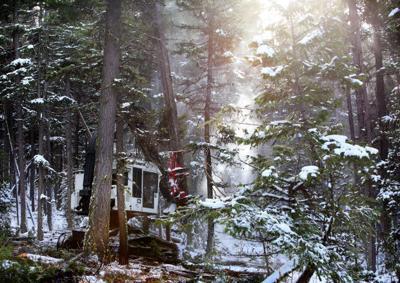 bitterroot national forest logging stockimage