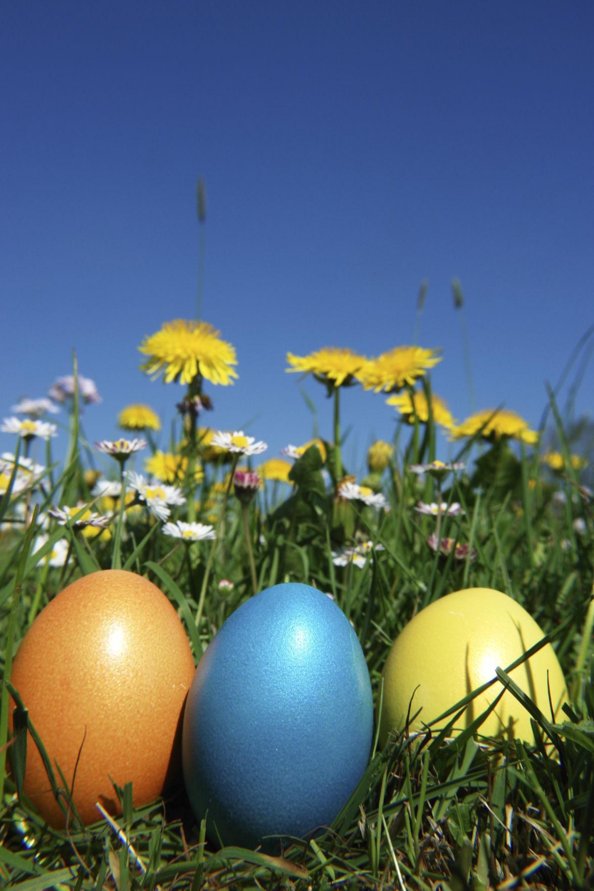 easter egg stockimage
