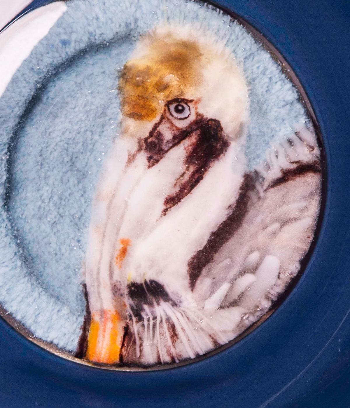 Sheard Pelican