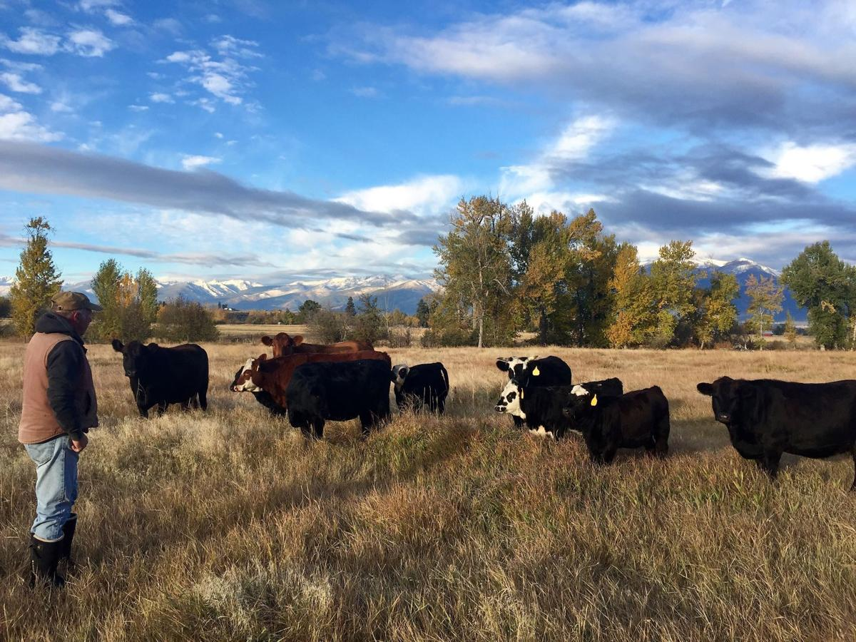 The surprising benefits of flash-grazing