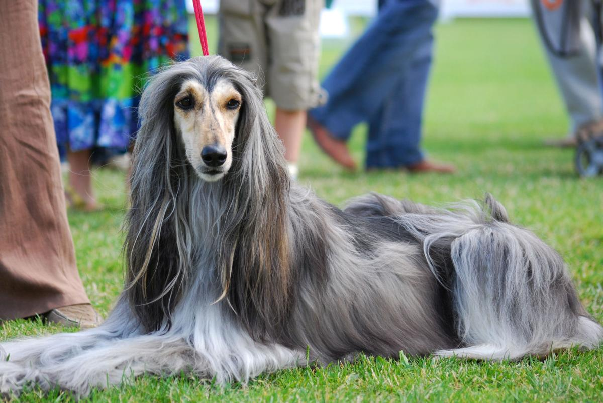 Meet the 19 least intelligent dog breeds | Pets