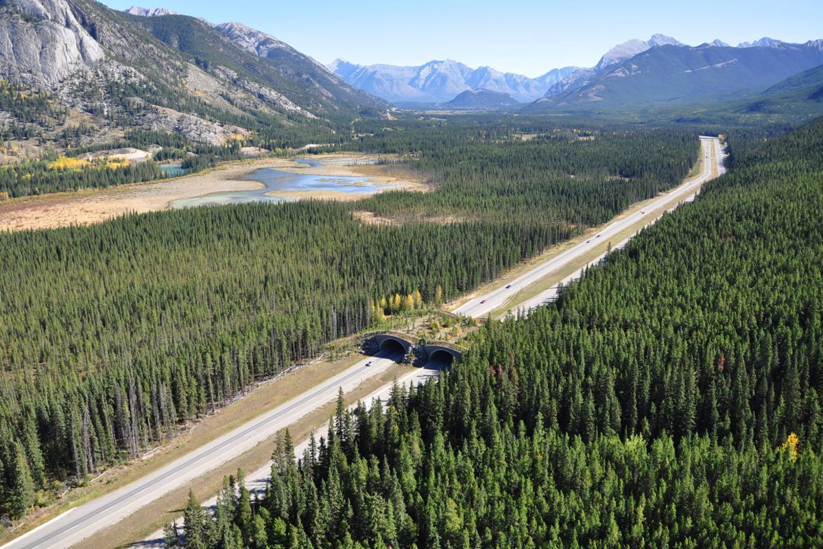 Banff Overpass