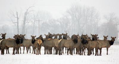 Long winter for wildlife