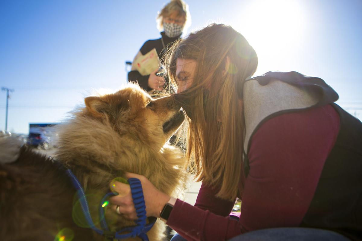 Leo the dog reunion