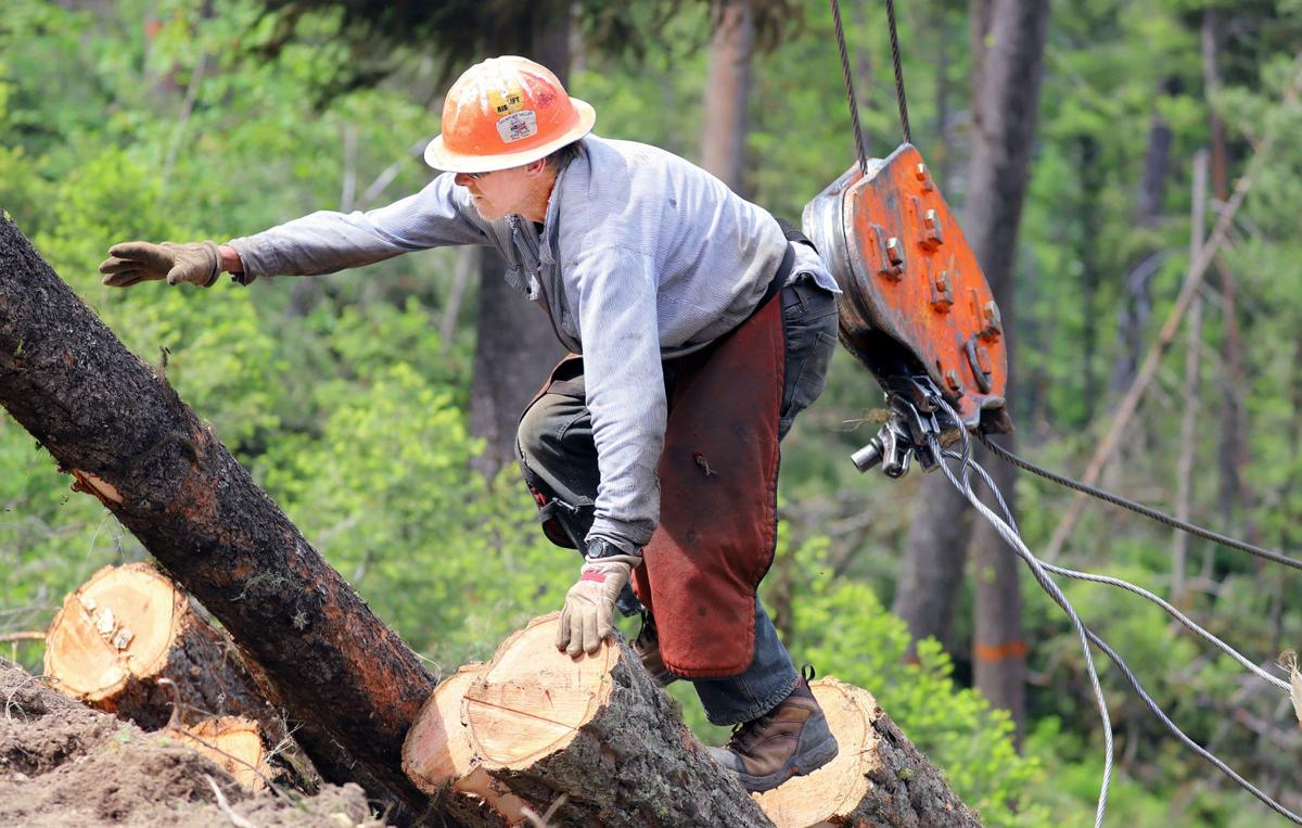 Logging starts on Meadow Vapor Fuel Reduction Project
