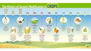 Outside influences steer GMO research