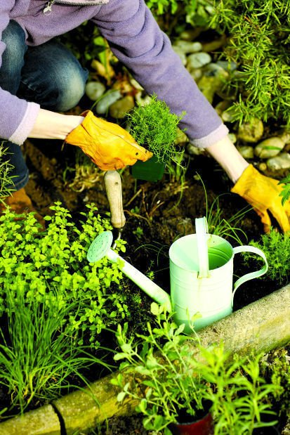 Dirty Fingernails: Never leave home without gardening knife | Home ...