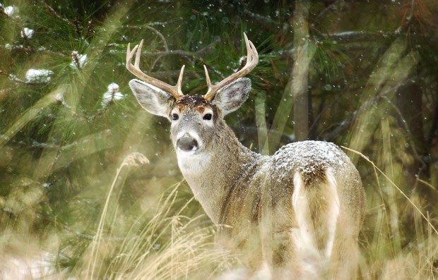 Entering the rut: Mating season offers hunters chance to ...  Entering the ru...