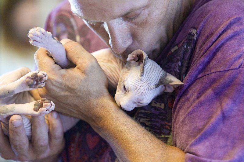 Couple breeds hairless cats   the BIZ   record-eagle com