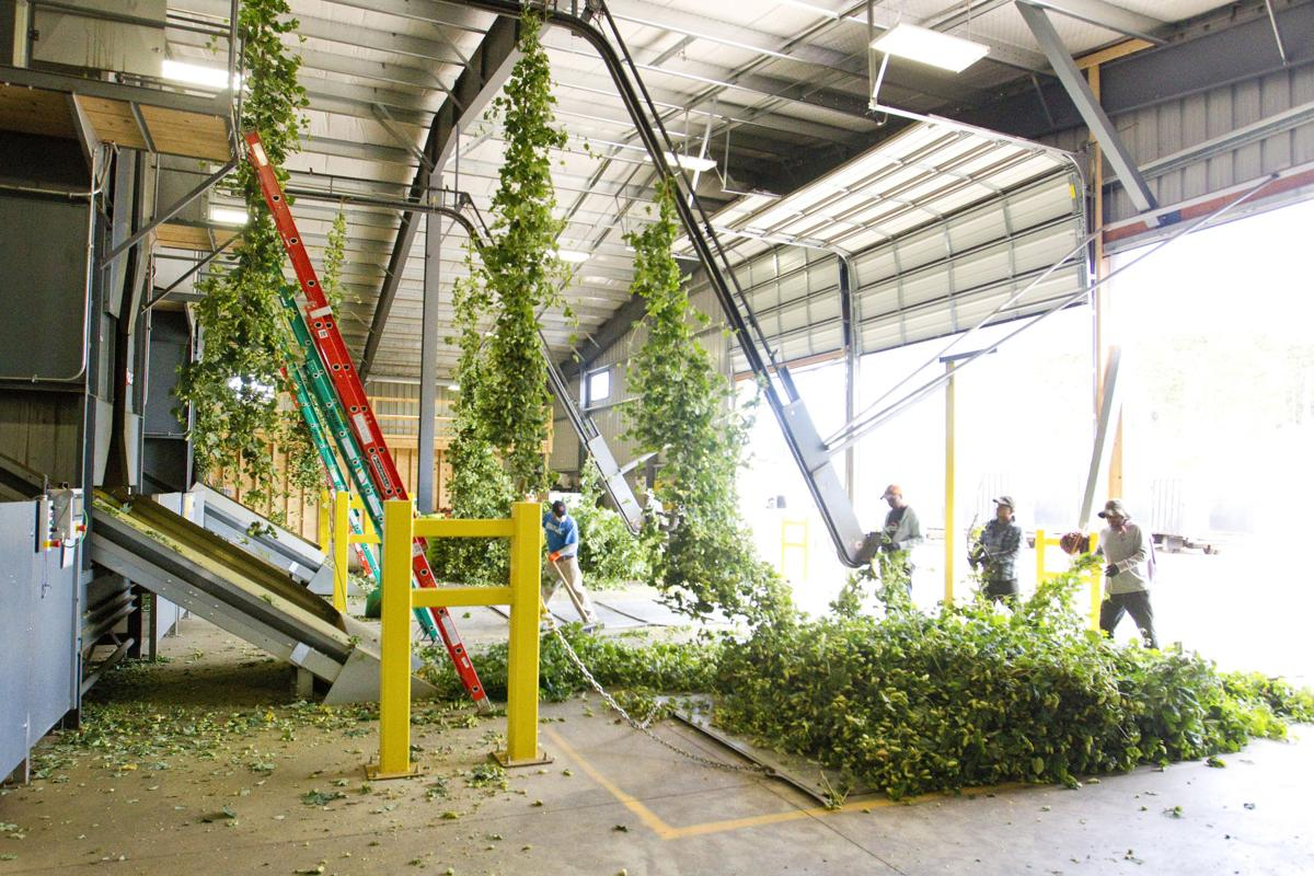 HOP HARVEST - standalone for A1