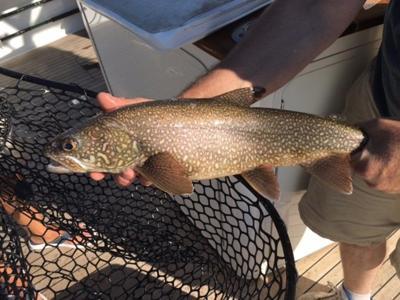 GT Bay lake trout limit cut