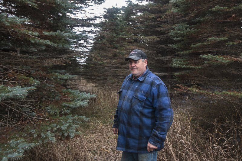 Family, Lions Club Continue Christmas Tree Sales In Noonan