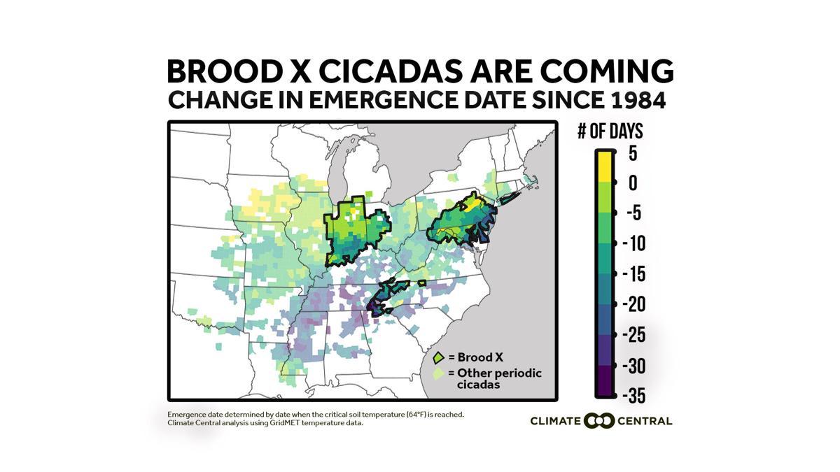 Cicadas Brood X emergence map