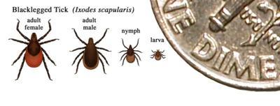 Lyme disease, tick population spread