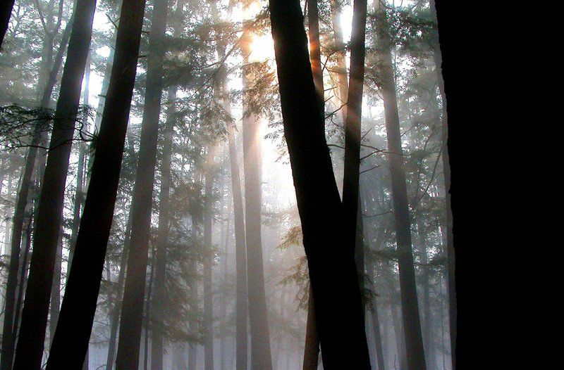 Hartwick Pines Reawakening