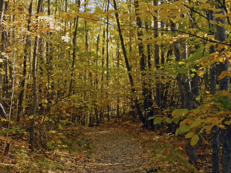 On the Trail: Holiday Woodlands Preserve offers safe hiking any time of year