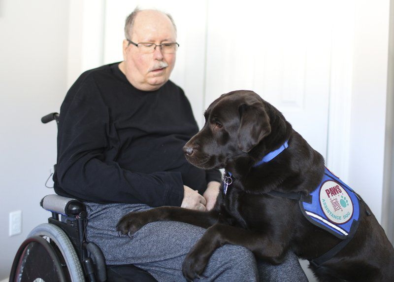 Walking with Woody: Service dog offers degree of freedom for disabled man