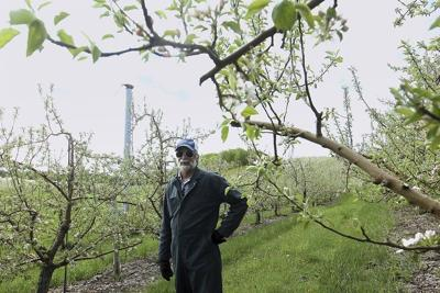 Growers see some damage, prepare for more cold