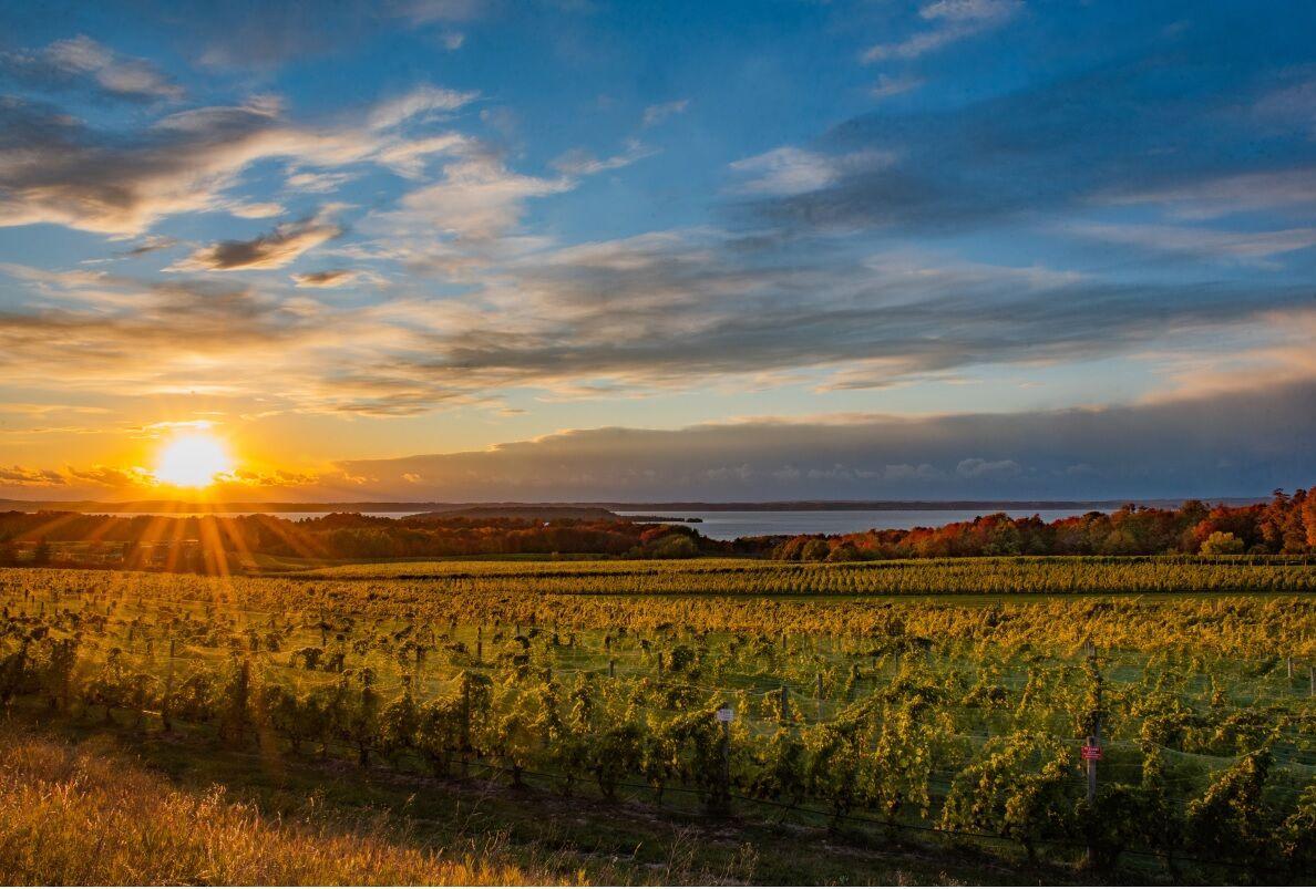 French Valley Vineyard at sunrise