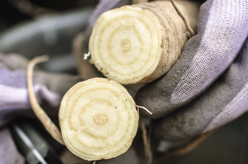 Getting to the root of salsify