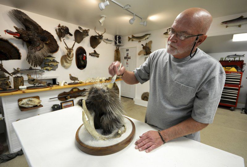 Lifelong interest in taxidermy continues in 'retirement'