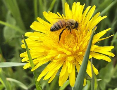 Agriculture Forum: Cool, wet weather impacts honeybees